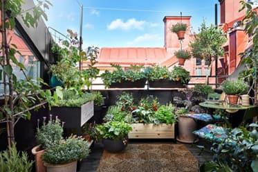 Växter på balkongen